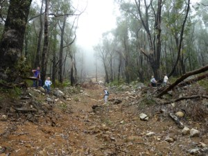 Mt Rosea - the newly created gully that crosses our access track