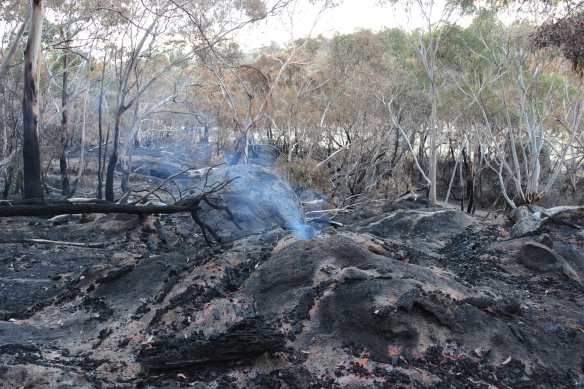tree stump still burning 9 days later