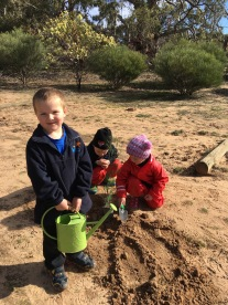Planting in the young trees